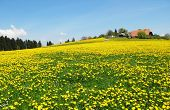 Spring in Emmental, Switzerland