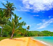 picture of tropical plants  - Tropical beach - JPG