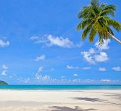White sand beach, palm tree, sea water, tropical nature and sky background
