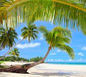 Tropical summer beach with palm tree branch frame, sea and sky background