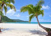 Tropical plants on seashore. Paradise beach.