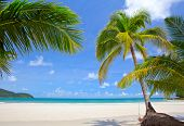 Beautiful beach with palm trees on white sand. Exotic travel destination