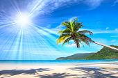 Sunny beautiful tropical beach with palms