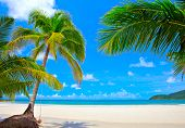 Summer nature scene with palm trees on white sand beach