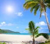 Palm trees on paradise beach under sky with shining sun and blue sea. Summer nature view.
