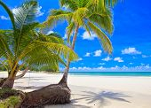Beautiful tropical beach with green palm trees on white sand under blue sky