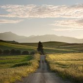 rural road crosses yellows fields with solitary tree at the twilight, in background layered hills of