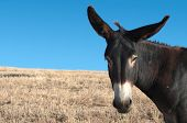 stock photo of wild donkey  - a donkey portrait  - JPG