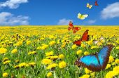 Постер, плакат: Красивый луг с летающими бабочки