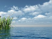 image of marsh grass  - water landscape and reed  - JPG