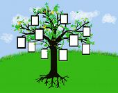 An illustration of a tree with frames for pictures or text. This might be a good start for a family tree.