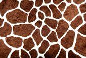 Manchas de girafa