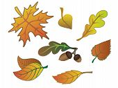 Autumn Leaves, Acorns, Oak Leaf. Set Of Autumn Leaves. Red, Yellow And Maroon Leaves. poster