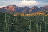 image of ocotillo  - Saguaros With Sunset Lit Superstition Mountains In Background Near Phoenix - JPG