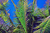 Green Palm Leaf On Vivid Blue Sky. Tropical Nature Vibrant Landscape. Coco Palm Leaf Digital Illustr poster