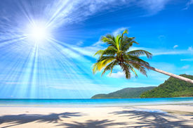 stock photo of summer beach  - Sunny beautiful tropical beach with palms - JPG