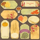 Set vector cards with vegetables, ash, autumn leaves and wheat ears