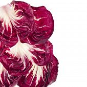 Fresh Red Cabbage Radicchio Rosso leaf texture isolated on white