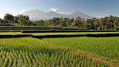 View on Rinjani volcano