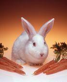 Bunny & Carrots