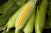 Sweetcorn Cobs