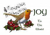 English Robin: Christmas Illustration, Joy To The World