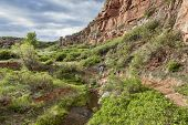 senior male backpacker hiking through sandstone canyon with a stream and green lush vegetation, Red