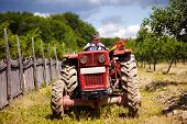 stock photo of tractor trailer  - Senior farmer driving his old tractor with trailer through a plum trees orchard - JPG