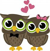 cute owls couple
