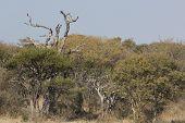 Afrcian Bushveld Landscape