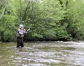 stock photo of fly rod  - fly fisherman casting a line in a trout stream - JPG