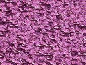 Lilac violet background