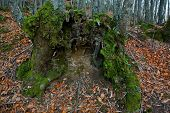 Green Open Stump Trunk