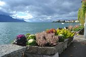 Flowerbed On Embankment In Montreux.