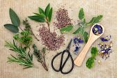 Herb selection with old gardening scissors over brown paper background.