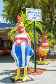 MIAMI,USA - MAY 19,2014 : Rooster with the cuban and the american flags next to a sign marking the e
