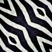 Beautiful Black And White Patterns Made From Zebra Skin