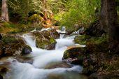 Galatea Creek