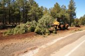 stock photo of skidder  - a wheeled skidder drags a pine tree along the side of a road
