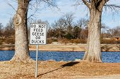 Don't Fees The Geese
