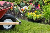 stock photo of manicured lawn  - Wheelbarrow alongside a newly planted flowerbed with colorful yellow celosia seedlings in plastic packets waiting to be transplanted into the soil by the landscaper - JPG