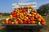 Very Many Different Colorful Pumpkins On A Tractor Trailer