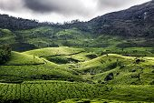 stock photo of foreshortening  - Green foreshortening of a hill covered by a tea plantation around Munnar