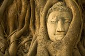Close-up Buddha head in the roots of the tree of Ayutthaya.