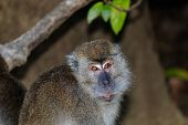 Long Tailed Macaque in the Jungle