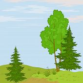 Landscape. Trees on hill