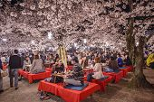 KYOTO, JAPAN - APRIL 3, 2014: People enjoy the spring season by partaking in nighttime Hanami festivals. The annual festivals coincide with the seasonal blooming of the cherry blossoms.