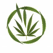 stock photo of marijuana leaf  - marijuana legalized  - JPG