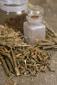 Dry Herbals, Different Medicinal Herbs - Willow Bark Medical