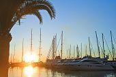 summer day with yachts at Marina Majorca